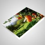 Blank 6x4 Note Cards with envelopes (pack of 25)